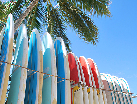 Surf Boards lined up next to a palm tree